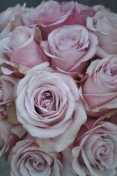 Sterling roses.... <3<3