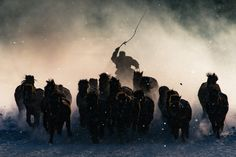 A Mongolian man herds horses during the harsh winter. This photo won the grand prize.