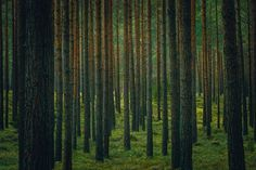 Photograph Forest IX by Danilo Giannini on 500px