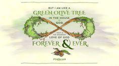 Psalm 52:8