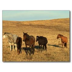 =>>Save on          Horse Herd in the West Post Card           Horse Herd in the West Post Card so please read the important details before your purchasing anyway here is the best buyDeals          Horse Herd in the West Post Card lowest price Fast Shipping and save your money Now!!...Cleck Hot Deals >>> http://www.zazzle.com/horse_herd_in_the_west_post_card-239942820647352308?rf=238627982471231924&zbar=1&tc=terrest