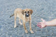 Qué hacer si has encontrado un perro en la calle - Mis animales