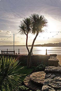 Palm Trees in Torquay, England