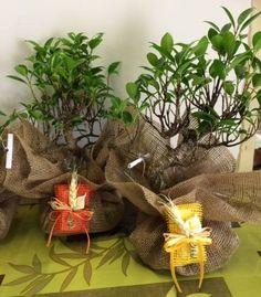 Bomboniere bonsai wpShowRatedv2('108381');bouquet composizioni floreali oggettistica Roma