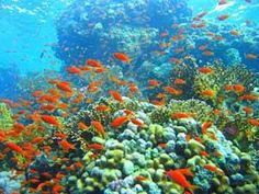 barrera coral Muhammad Nature Park