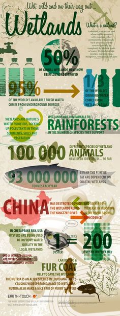 World Wetlands Destruction Infographic- wetlands offer an environment for biodiversity to flourish while offering the environment several other benefits like filtration and a host for carbon. Teaching Science, Life Science, Science Fair, Ap Environmental Science, Environmental Posters, Environmental Justice, Our Environment, We Are The World, Natural Resources