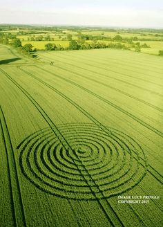 Crop Circle at Foxley Road, nr Sherston, Wiltshire. Reported 9th June   2015