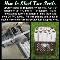 How to 'start' tree seeds