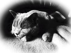 #Caturday(18)