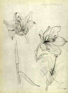 georges braque drawings | 1955 Heliogravure Georges Braque Lily Flowers Floral Botanical Verve ...