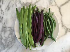 Musica Beans Purple Heirloom Beans Jade Green Beans #gardening #garden #gardens #DIY #landscaping #home #horticulture #flowers #gardenchat #roses #nature