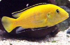 Dr. Thomas R. Reich    @Mawyl Fish Advisor follows you    Dr. Thomas R. Reich is a PhD Ichthyologist and is one of the world's most experienced experts in the field of fresh water aquarium fish.   Orlando, Florida   ·  aquariumfishadvisor.com