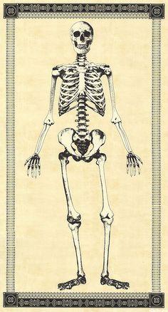 """Mr. Bones - Skeletal Remains - Parchment - 24"""" x 44"""" PANEL"""