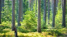 Millainen on luontopersoonasi - tee testi | Luonto | yle.fi