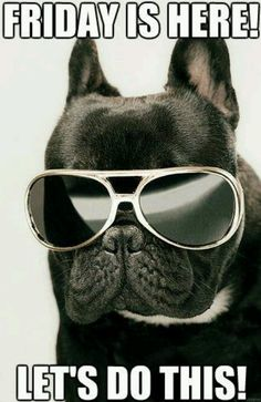 Friday is here quotes cute quote friday days of the week friday quotes french bulldog awesome and funny like it! Happy Dance, Retro Humor, Memes Humor, Dog Memes, Funny Memes, Someecards, Quotes Pink, Viernes Friday, Friday Images