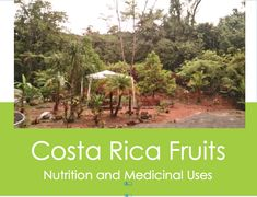 costa-rica-fruit-medicinal nutrition, herbalist, medicinal uses of bananas, papayas, cas, pineapples and mammon chino