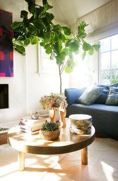 美しく癒しを与えてくれるインテリアとしての観葉植物。センスよく取り入れたいですね。実際に家のどこに、どんな色と組み合わせてレイアウトするのが良いのでしょうか。また植物は呼吸することにより、空気清浄の効果をもたらします。中でもに効果の高い植物の種類は「エコプランツ」と呼ばれています。健康も意識した、観葉植物の選び方を知ってみましょう。