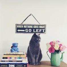 Decorando a casa com gatos!