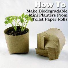 re-purposed toilet paper roll planters, plus 6 more repurposing ideas for your garden