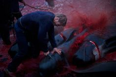 Stop the murders of the pilot whales in the Faeroe Islands. http://www.thepetitionsite.com/792/850/997/stop-the-murders-of-the-pilot-hvales/?taf_id=10858506&cid=fb_na# #SeaShepherd #defendconserveprotect