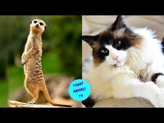 Funny Animal Videos, Funny Animals, Animal Tv, Photo And Video, Youtube, Instagram, Animals, Humorous Animals, Hilarious Animals