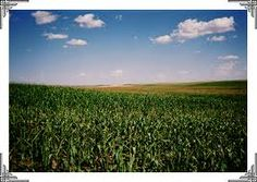Lower Risk of Farm Land for Sale in Mexico