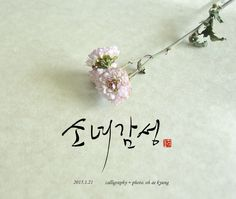 캘리그라피 + 꽃   calligraphy + photo. oh ae kyung