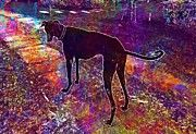 "New artwork for sale! - "" Dog Mudhol Hound Caravan Hound  by PixBreak Art "" - http://ift.tt/2eIsPCf"