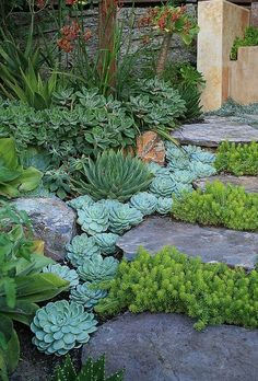 When I moved to the Phoenix area I distinctly remember seeing yards that had green rocks. Apparently the low water way to have a lawn. How h...
