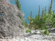 Lake Minnewanka hiking trail