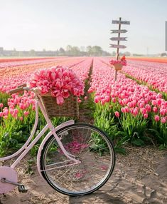 Tulips in the Netherlands Canon Photography, Nature Photography, Photography Flowers, Photography Photos, Lifestyle Photography, Tulip Season, Juan Les Pins, Tulip Fields, Vacation Trips