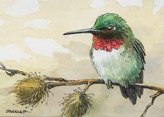 _45 | par Peter Sheeler Watercolor Hummingbird, Hummingbird Art, Watercolor Animals, Watercolor And Ink, Watercolor Flowers, Watercolor Paintings, Watercolor Portraits, Watercolor Landscape, Abstract Paintings