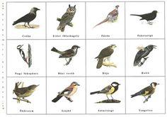 Bergamott: Itthon telelő madarak