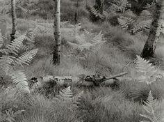 John Blakemore   Master Photographer   On Landscape