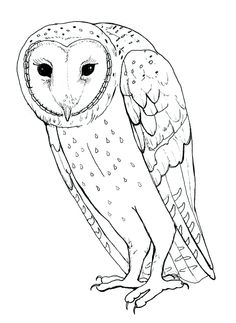 barn owl coloring pages for kids