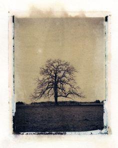 Polaroid transfer