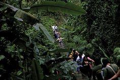 (Foto) Los turistas recorren un camino en la Reserva Natural Patrocinio, a 4km del Volcán Santiaguito, en Quetzaltenango (Guatemala). EFE