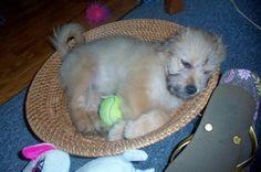 Lila's new basket