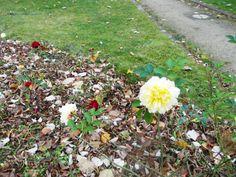 Flowers in the yard of Westend hospital, Berlin