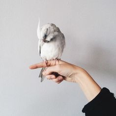 bird, animal, and hand image