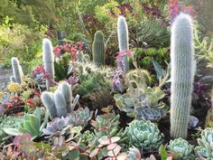 Cacti and succulents at (of all places!) Hunting Brook Gardens Jimi Blakes garden in Blessington Ireland.
