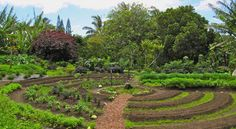 Permaculture Gardening: A Way To Unplug Yourself From The Industrial Food System