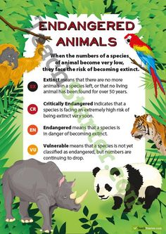 Endangered Animals Classification Poster Teaching Resource