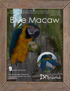 apple eating blue macaw by :: 2Xtreme