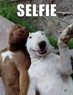 "When dogs take ""selfies""..... (get a load of the face on the brown dog....hahaha)"