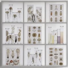 Steffen Dam, Cabinet of Curiosities, 2010, glass and wood, Chazen Museum of Art, Madison WI