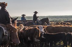 Never before seen photographs of the historic Waggoner Ranch from Jeremy Enlow's archives. | Waggoner Ranch photographed by Jeremy Enlow #horses #cowboys