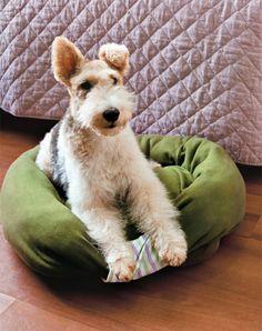 Sweatshirt Dog Bed