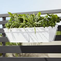 Shop oscar hi-gloss white rectangular rail planter and rail frame.   Slicked in hi-gloss white, galvanized steel cylinder plants greens in industrial fashion.