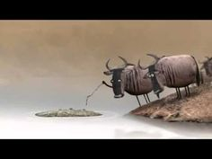Não discuta com Idiotas (animação da BirdBox Studio) - YouTube